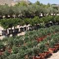Mediterrane planten
